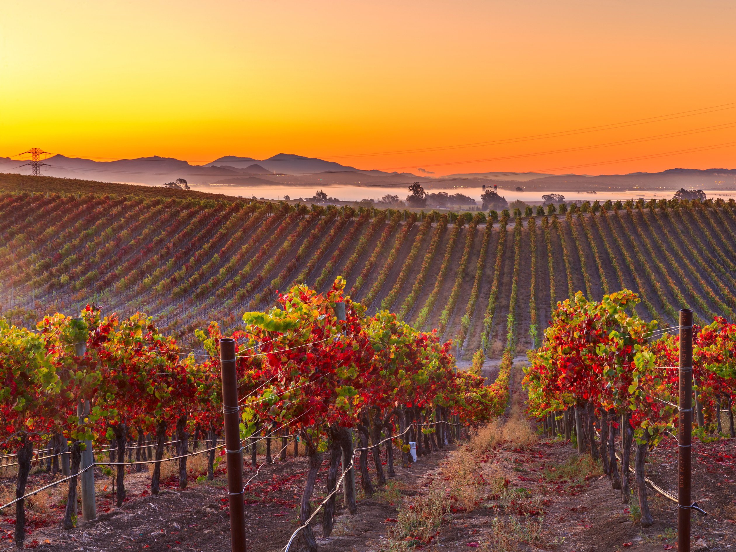 Sustainable Practices and Travels in Napa Valley